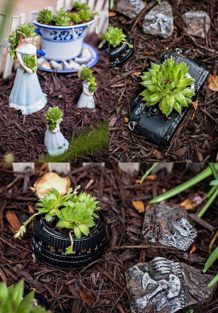 Garden 2015 Siobhan Young